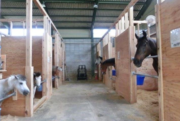 乗馬 クラブ 守谷 茨城県守谷市の乗馬クラブ よつば乗馬クラブ