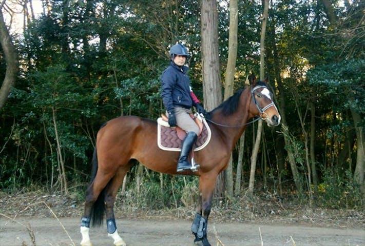 乗馬 クラブ 守谷 田村純子の乗馬クラブ?Facebookの豪遊生活と旦那や子供