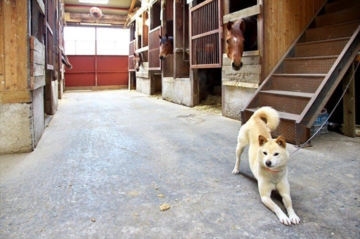 馬のお世話】鳥取・大山で厩務員体験。馬と友達になろう!|アソビュー!