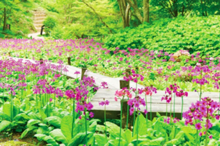 六甲高山植物園|割引チケット・クーポンならアソビュー!