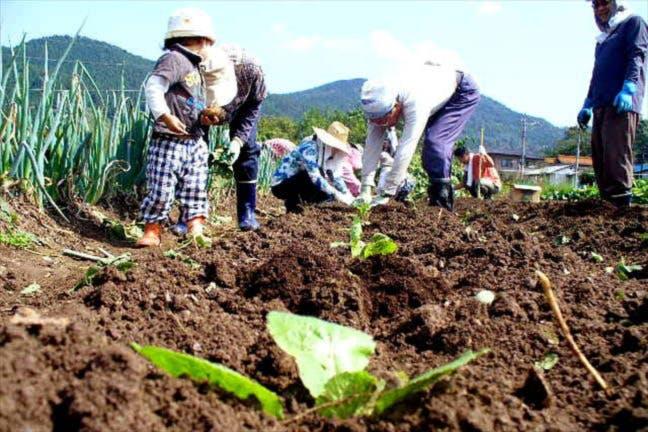 甲信越の農業体験・田植え体験