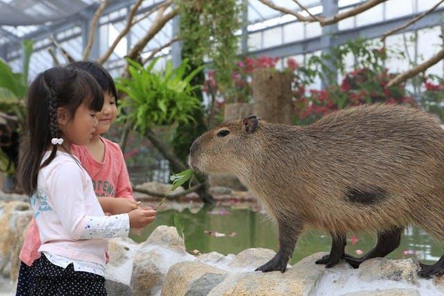 東北の動物園