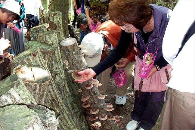 徳島・鳴門のキノコ狩り・しいたけ狩り
