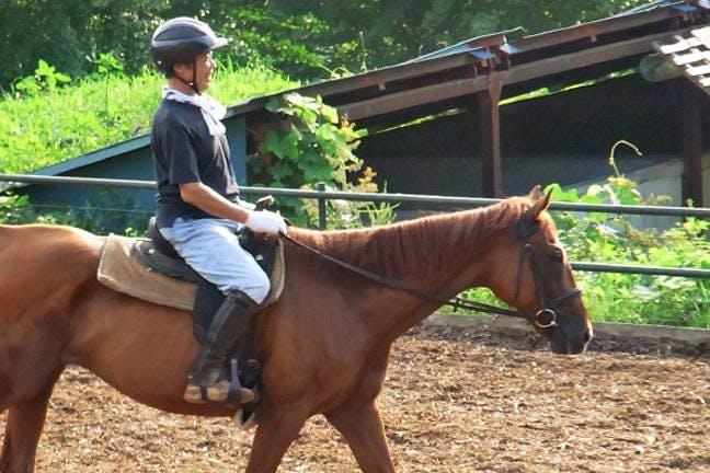 東伊豆の乗馬体験