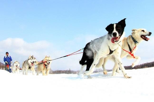 雪遊び・冬遊び