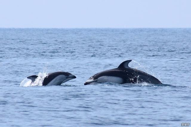 イルカクジラウォッチング