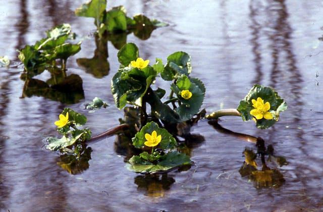 釧路湿原の植物