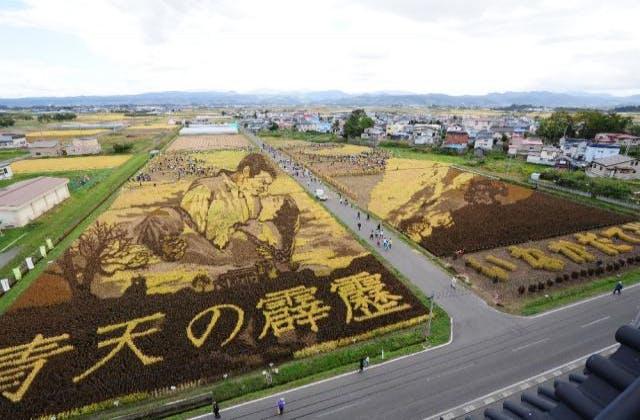 稲刈り体験ツアー作業風景2