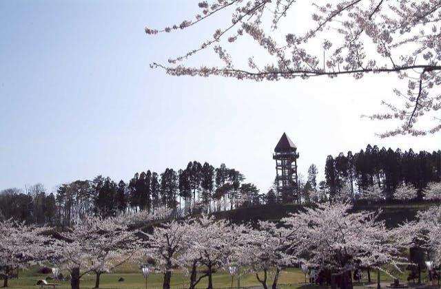 下田公園春