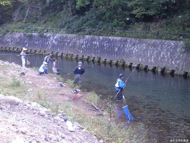 真瀬川のアユ釣り