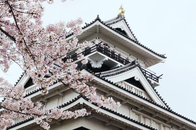 上山城(桜)