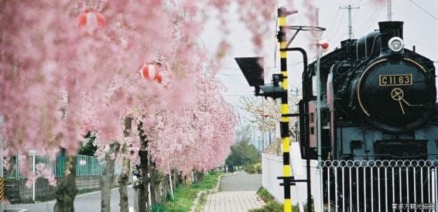 SLとしだれ桜並木