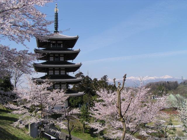 安達ヶ原の桜
