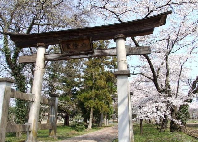 八幡神社 春