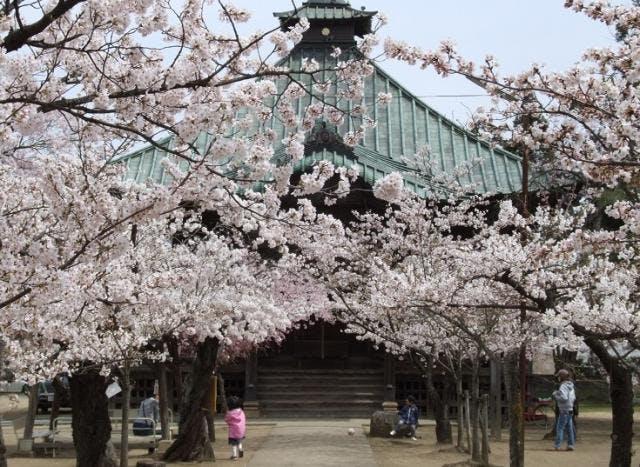 薬師堂の桜