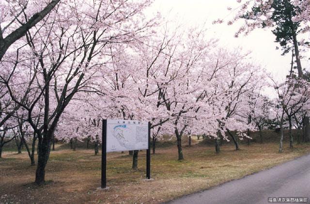 天神岬スポーツ公園の桜