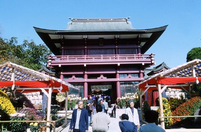 笠間稲荷神社の菊