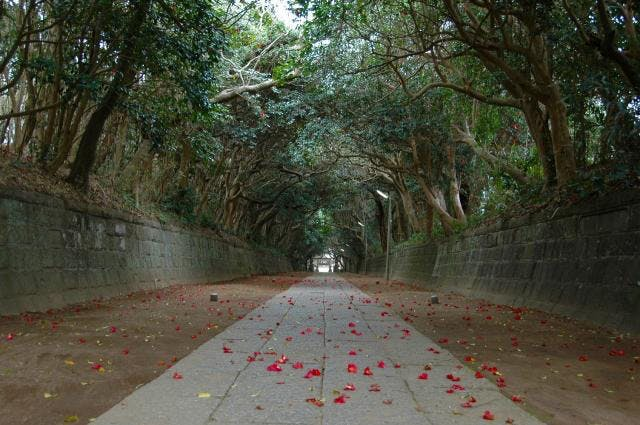 酒列磯前神社の樹叢