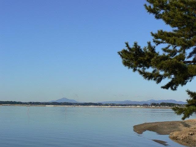 美しい松林と筑波山