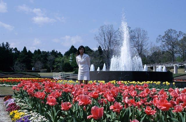 茨城県植物園のチューリップ