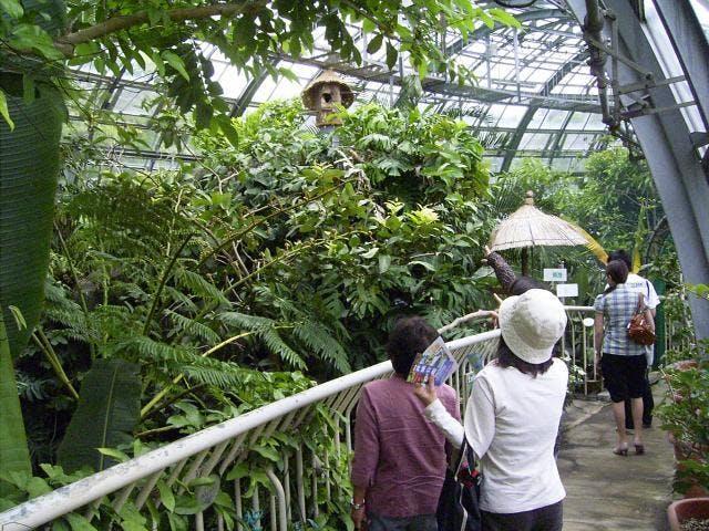 井頭公園 大温室「花ちょう遊館」