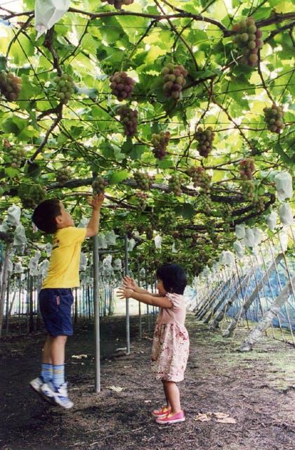 高根沢観光ブドウ園