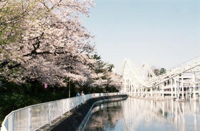 華蔵寺公園のさくら