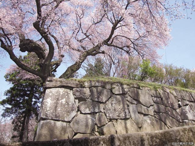 御殿桜石垣