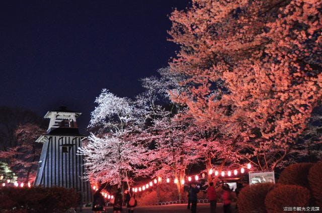 沼田公園の桜夜桜