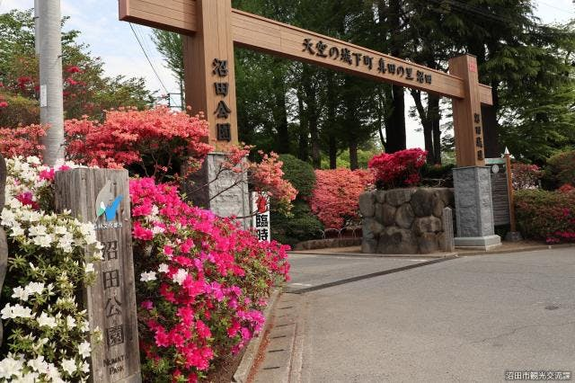 沼田公園(つつじ)