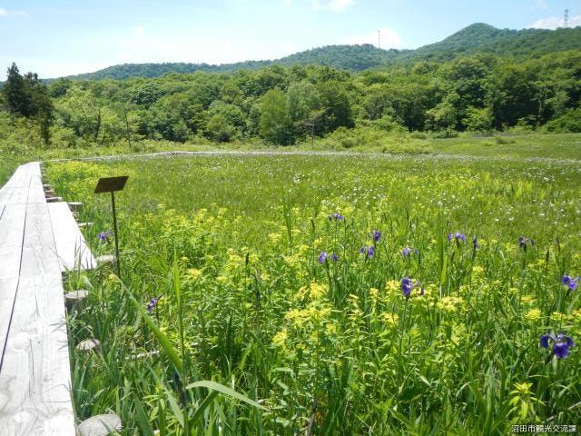 初夏の玉原湿原