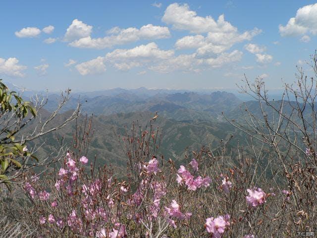 小沢岳のアカヤシオ