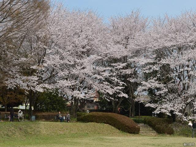 内牧公園(お花見広場)