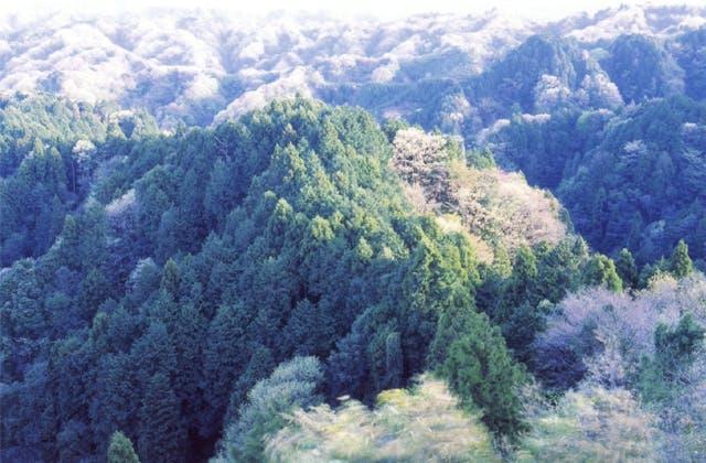 大福山自然林