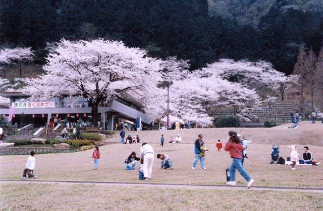 神奈川県立津久井湖城山公園・水の苑地・花の苑地