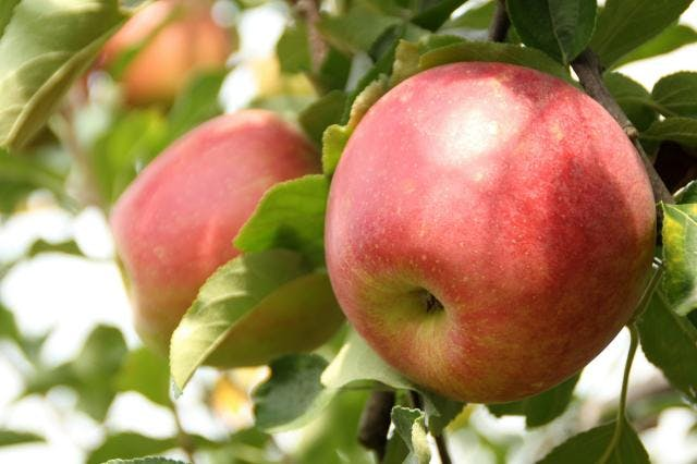 ひみりんご