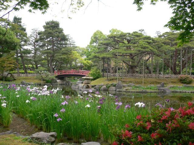 芦城公園花菖蒲