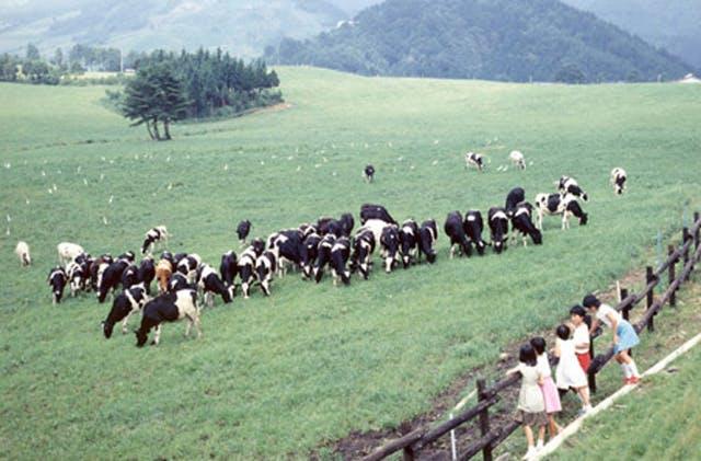 福井県奥越高原牧場