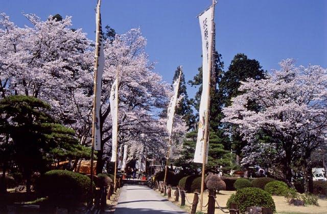 恵林寺境内の桜
