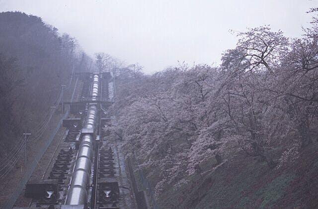 鹿留発電所の桜