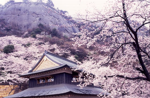 岩殿山の桜・ツツジ
