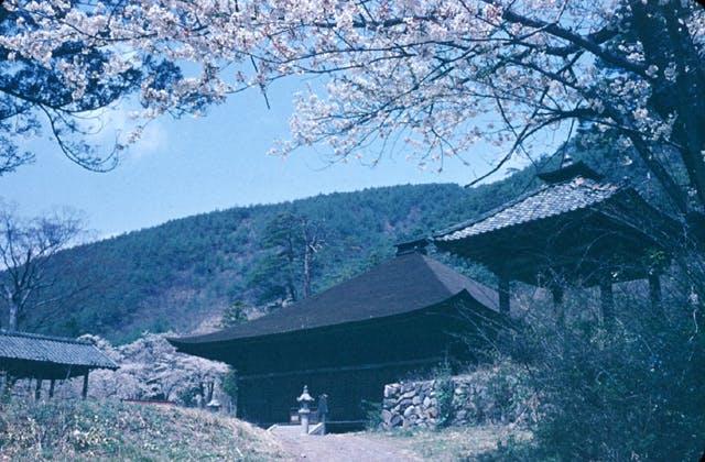 大善寺の桜