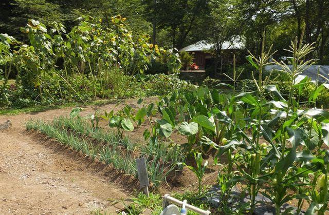 道志体験農園
