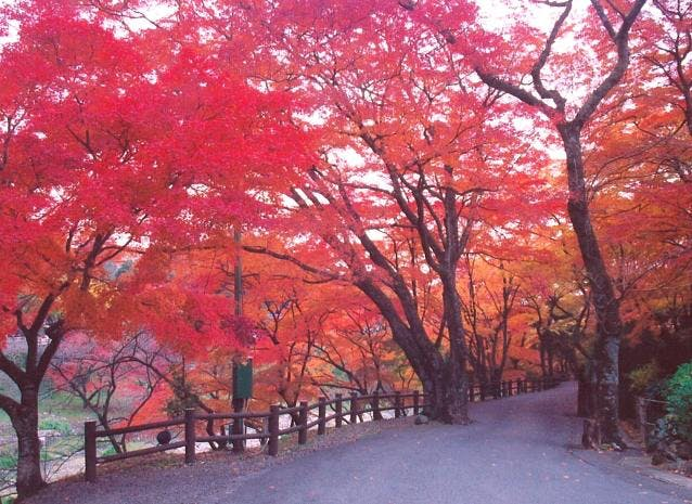 養老公園 紅葉
