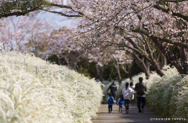 愛知県緑化センター(サクラとユキヤナギ)