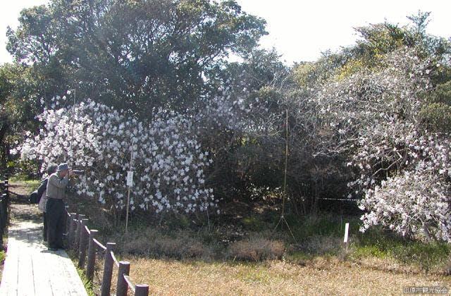 黒河湿地植物群落