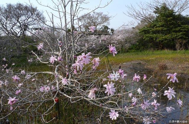 藤七原湿地植物群落