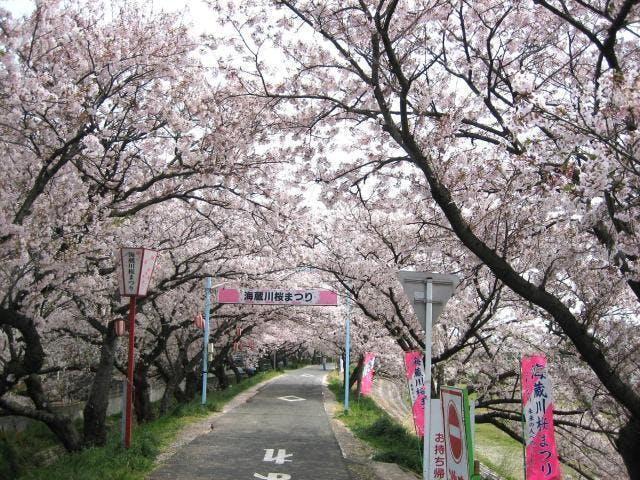 海蔵川桜まつり