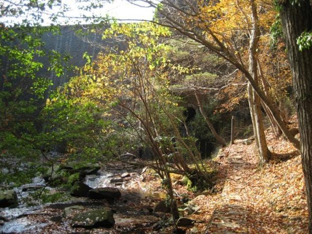 るり渓 遊歩道