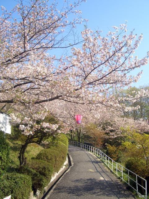 玉手山公園の桜